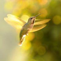 10,000 Hummingbirds