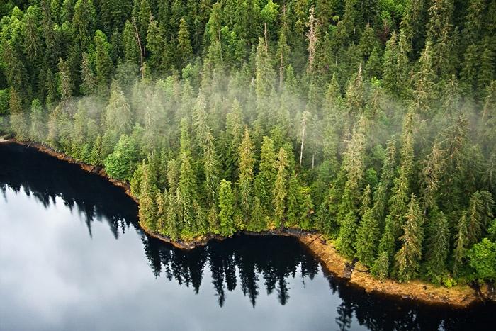 Alaska's Tongass Forest