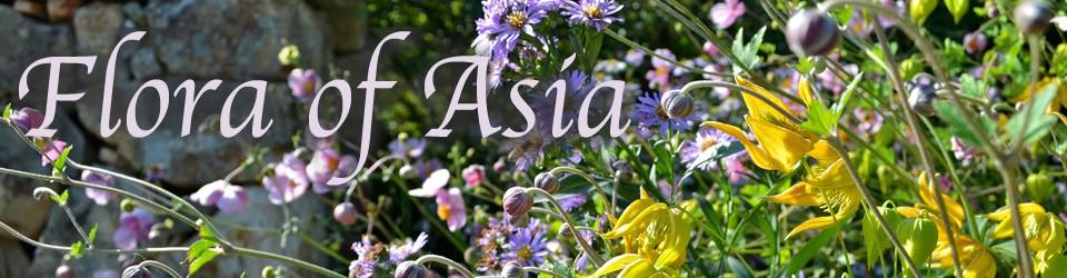 Resultado de imagen para Flora de asia