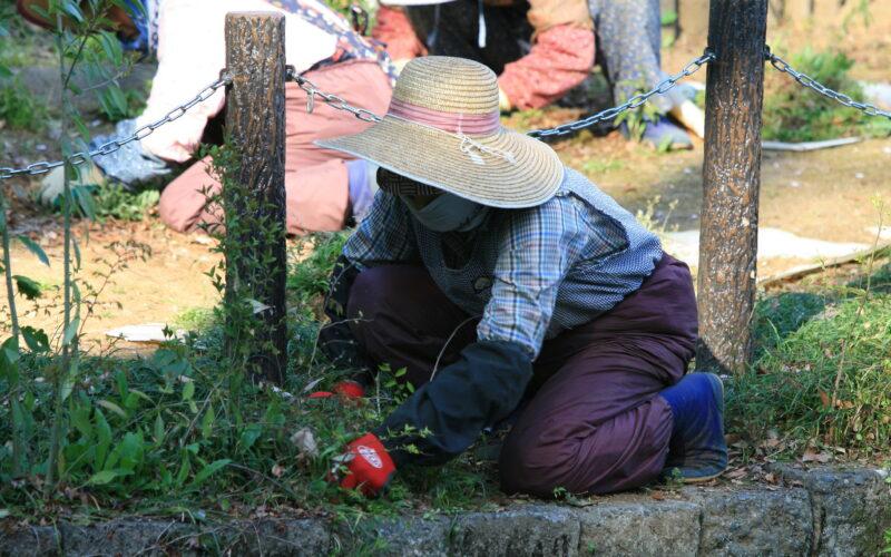 Gardeners working the soil